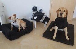 Hundekollektion